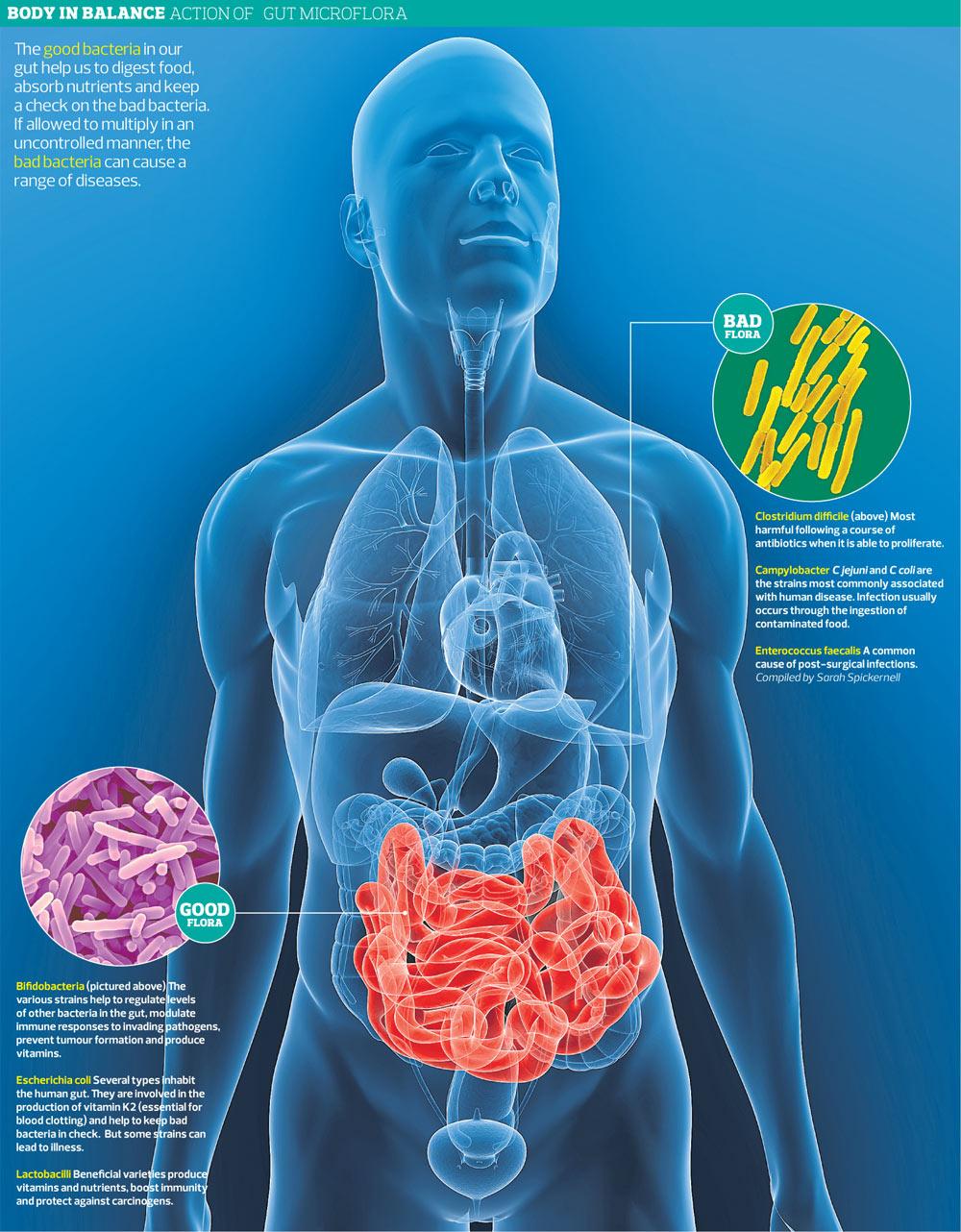 Buena y mala flora bacteriana