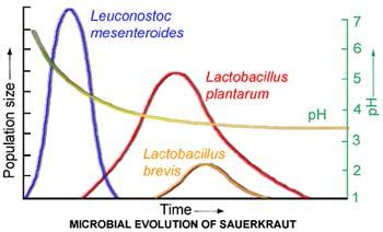 Evolución de las cepas de lactobacilus, dependiendo de los días de fermentación