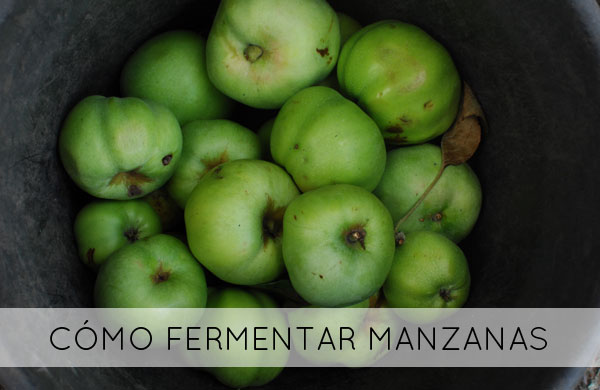 Fermentación de las manzanas